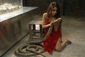 Знак зодиака змея женщина