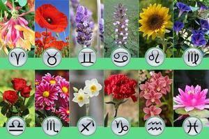 Пример цветочного гороскопа