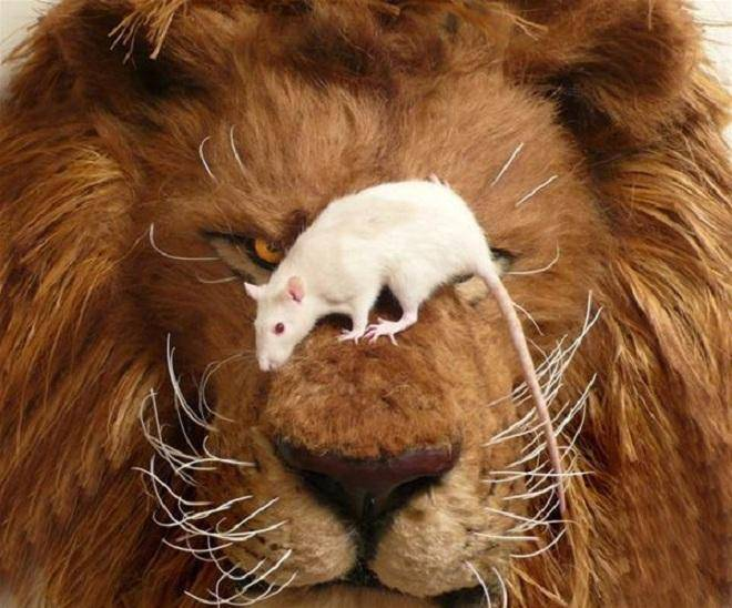 Знак зодиака лев крыса женщина
