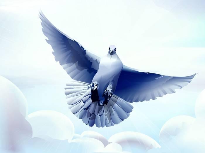 Символ белый голубь