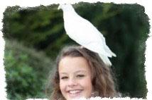 Белый голубь примета