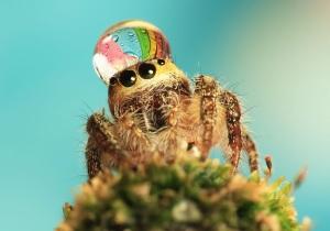 К чему дома пауки