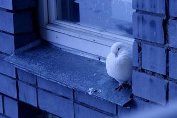 К чему голубь сел на подоконник