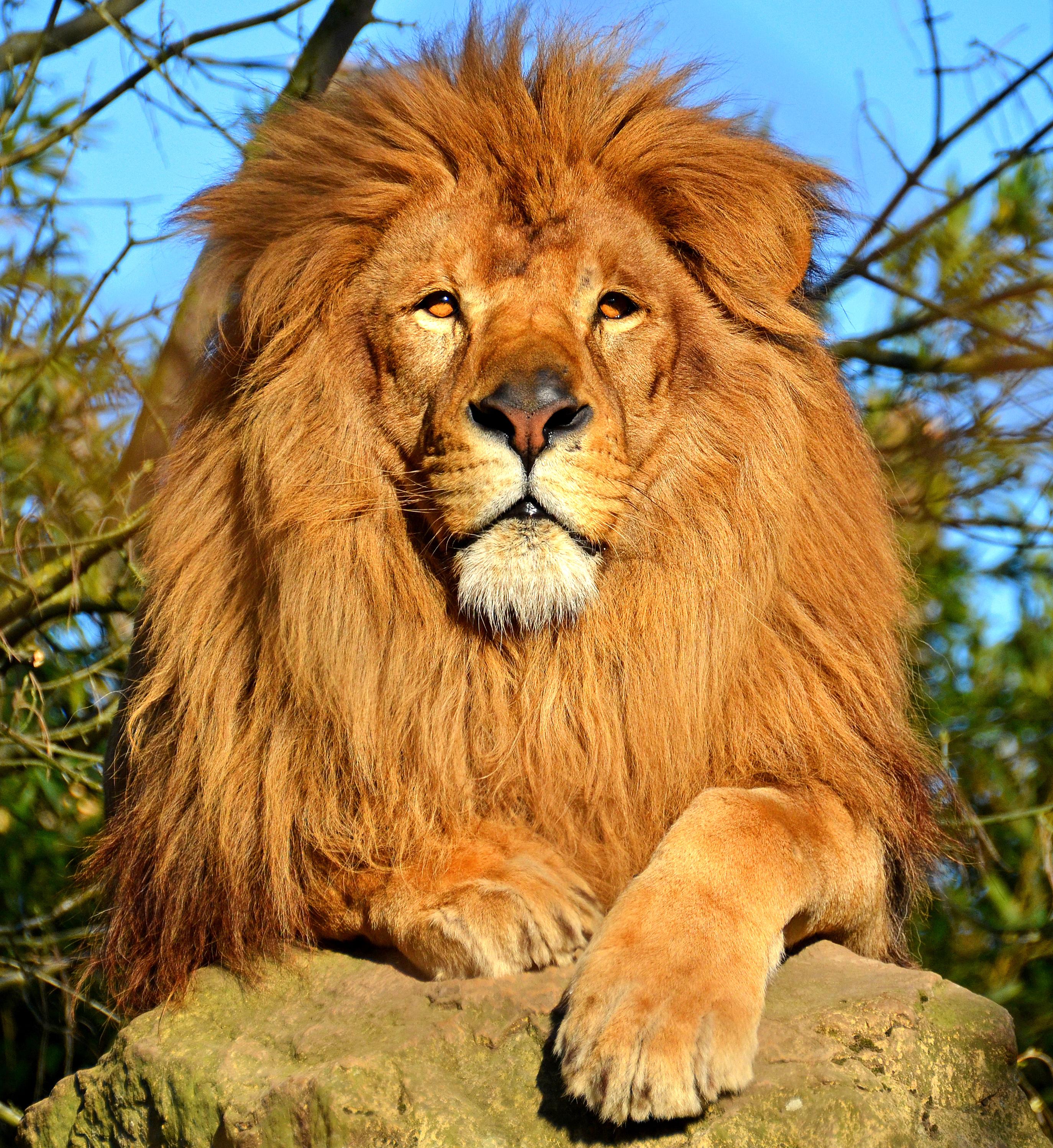 Талисман для льва женщины