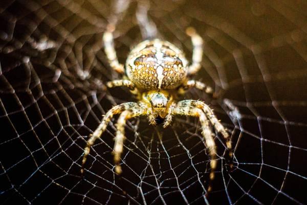 Примета паук в доме большой