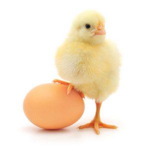 Порча на яйцо